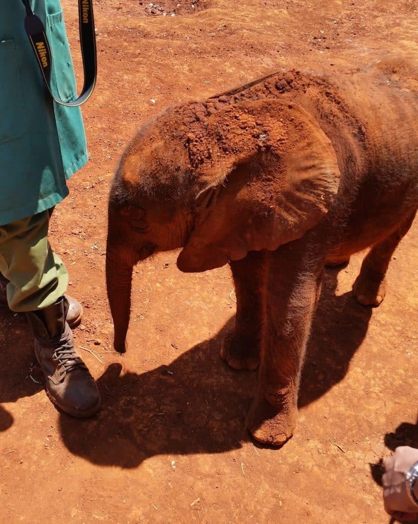 Elephant Nairobi